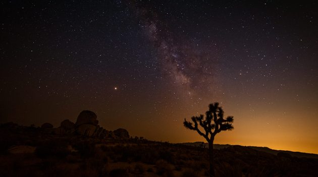 Perseids Meteor Shower in Joshua Tree National Park